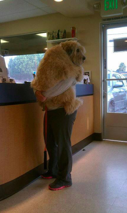 Scared Dog in Vet Clinic