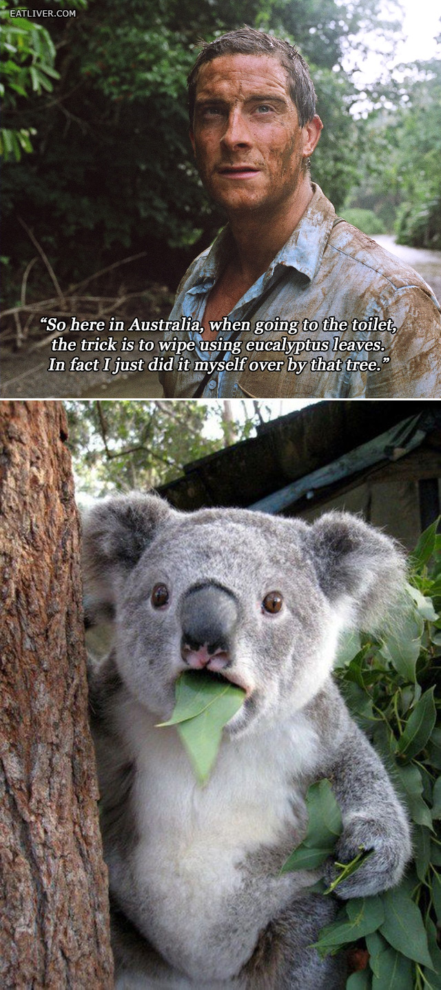 Bear Grylls Survives in Australia