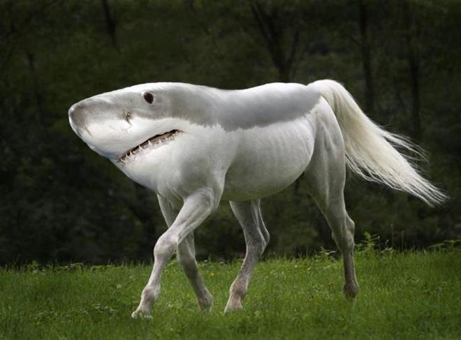 sharkpony