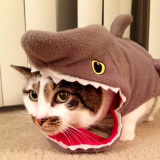 Catshark: Halloween Costume Idea for Your Cat