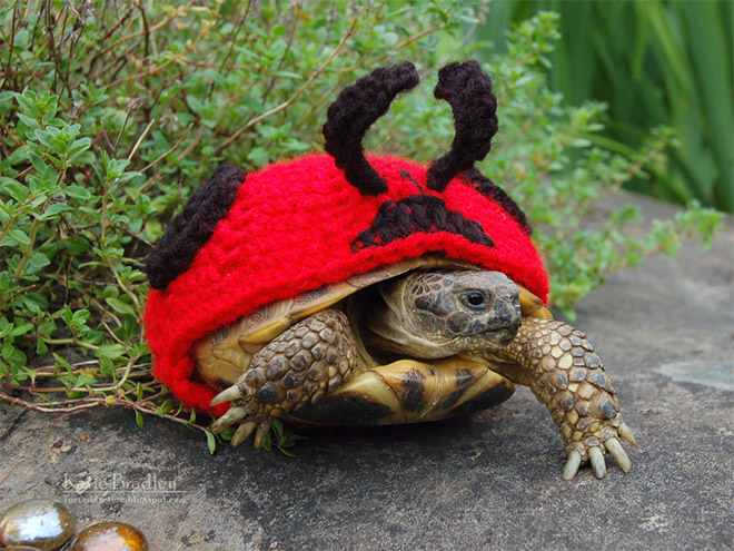 How to Keep Your Tortoise Warm This Winter
