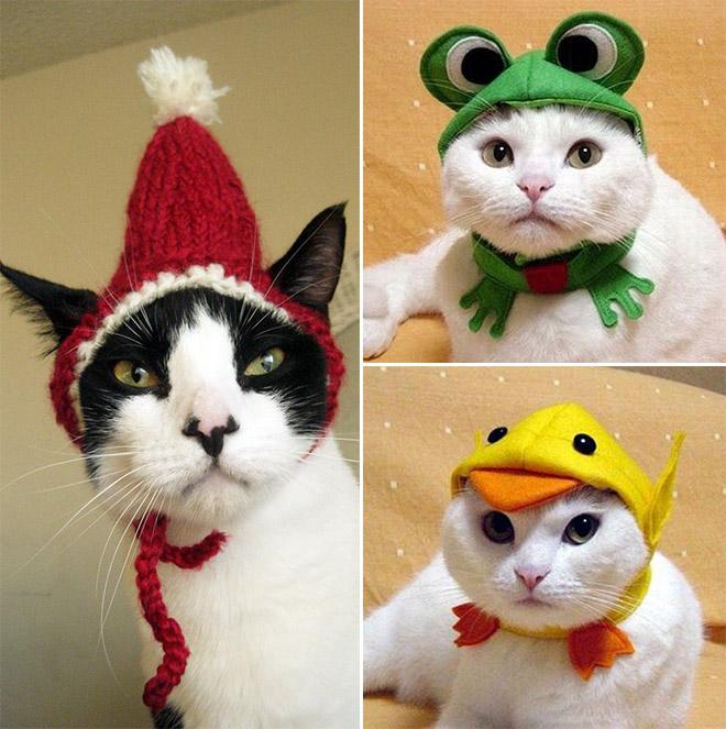 Cats In Hats Calendar