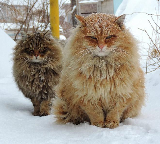 Finnish cat metal band.