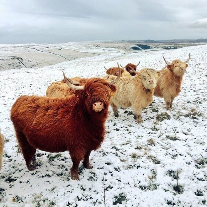 These cows look like they're about to drop the hottest indie rock album of the year.