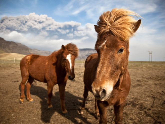 The 80s duo horse pop band from Iceland.