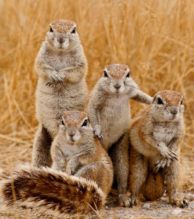 The hard rock squirrels.