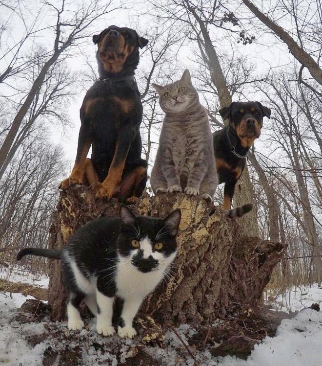 The Meow-Tang Clan pose for their debut rap album.