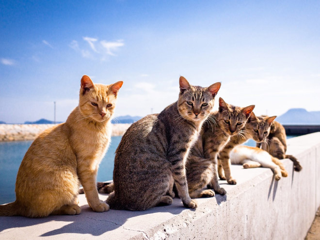 Hottest cat band album is coming soon.