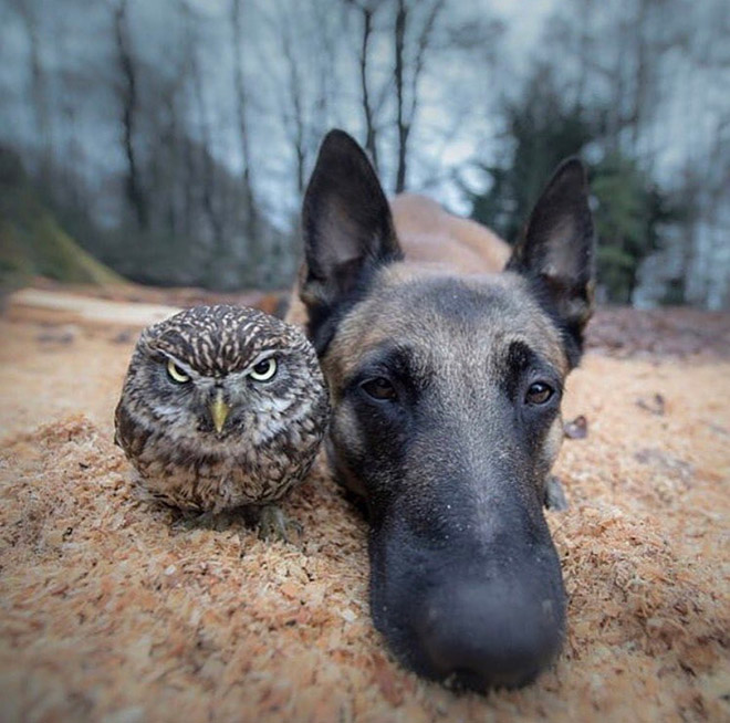 This dog and owl dropping their new album.