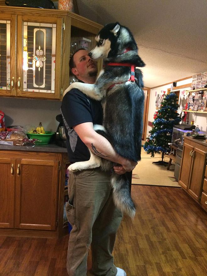 He still thinks he's a puppy.