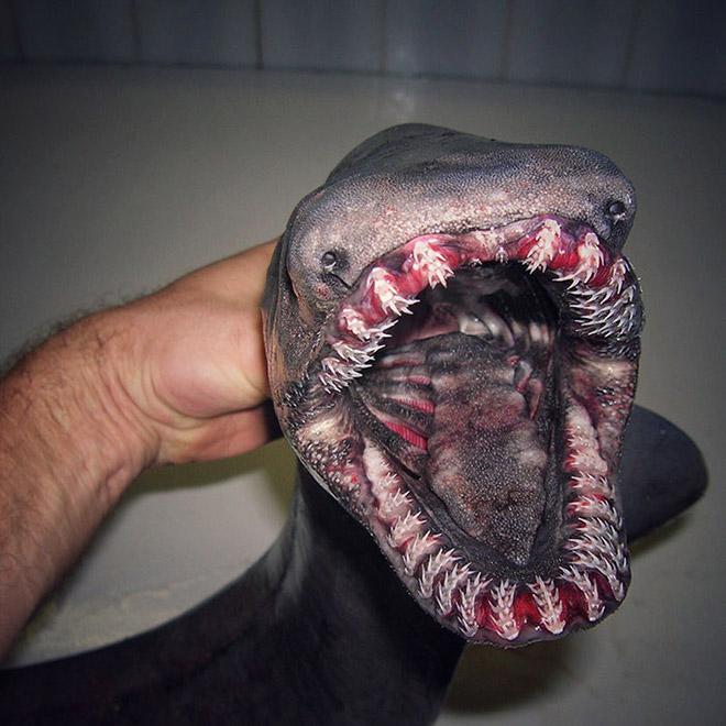 Scary deep sea fish.