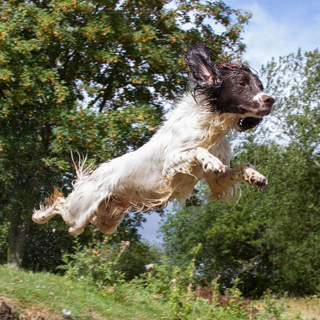 Flying dogs are real!