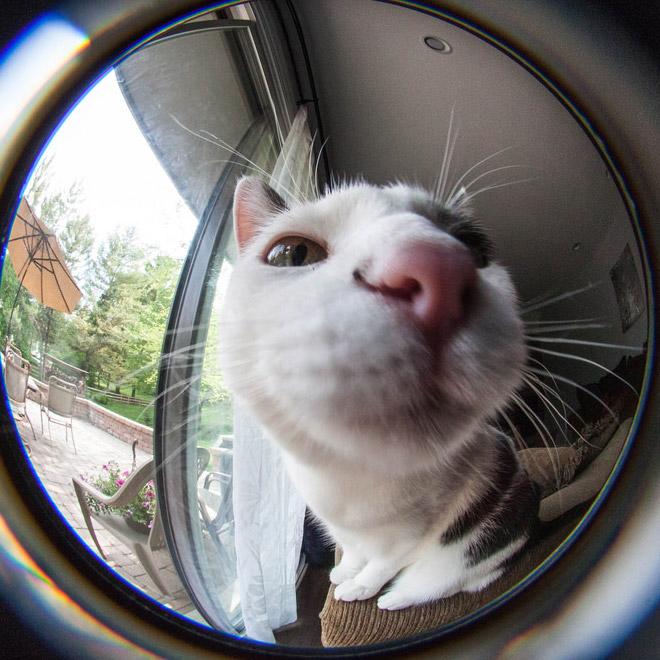 Fisheye lens cat closeup photo.