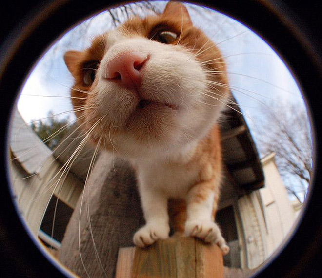 Cat bumping into photo camera.