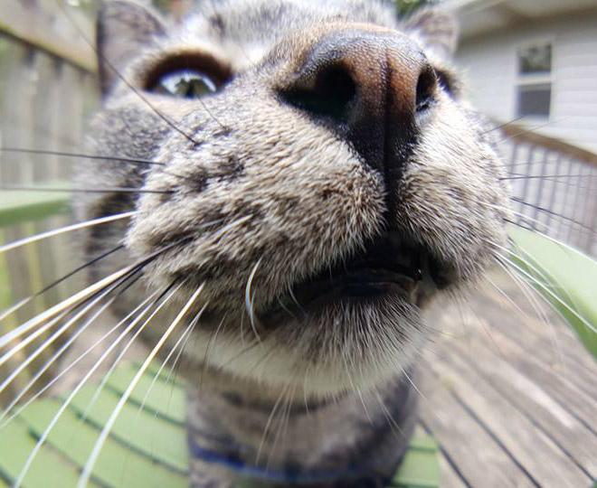Funny cat bumping into camera.