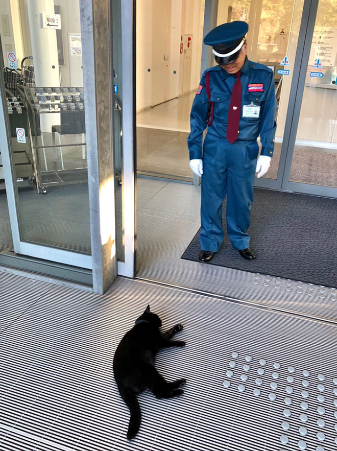 Black cat sneaking into a museum.