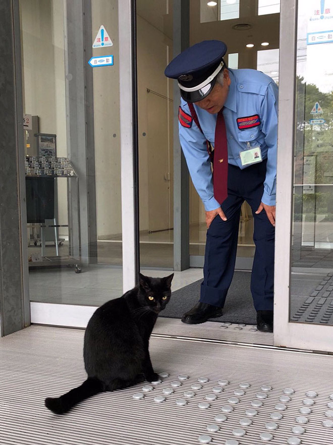 This cat is not happy that he wasn't allowed to enter a museum.