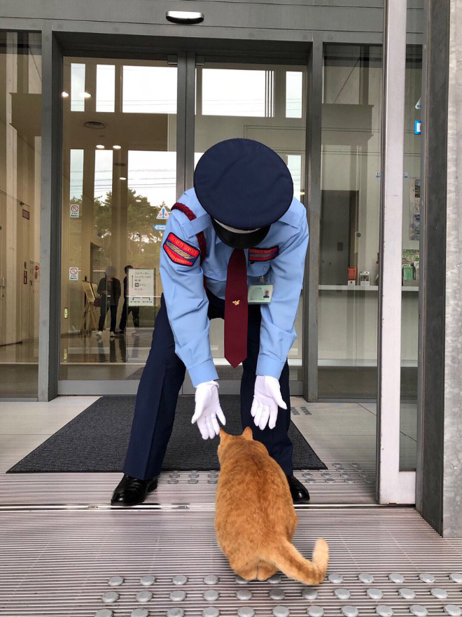 Cat vs. museum security guard.