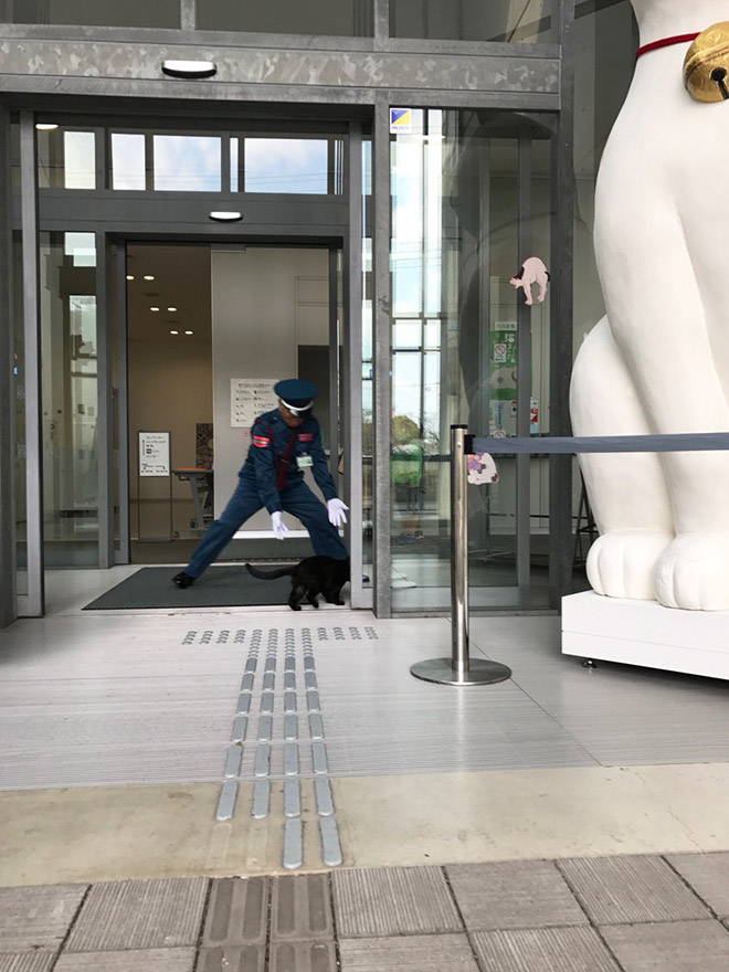 Museum guard vs. sneaky cat.