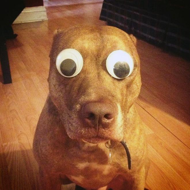 Googly eyes make everything better.