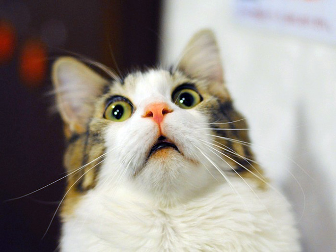 Hilarious face of a surprised cat.