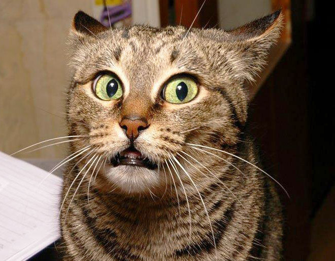 Funny surprised cat.