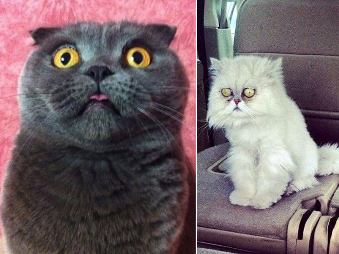 Funny surprised cats.