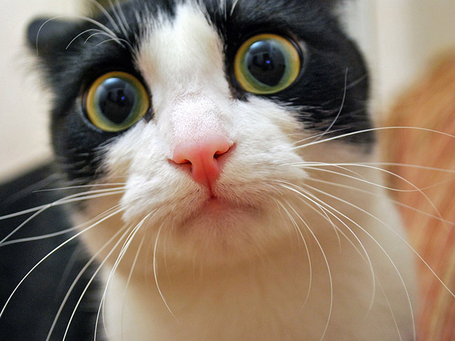 Funniest confused cat face ever.