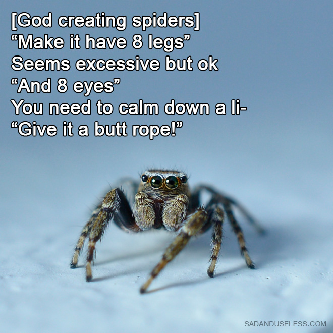 How God created spiders.