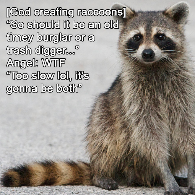 How God created raccoons.