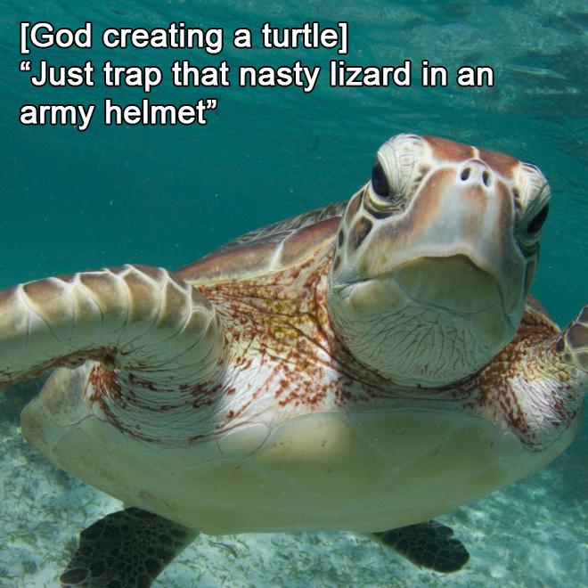 How God created turtles.