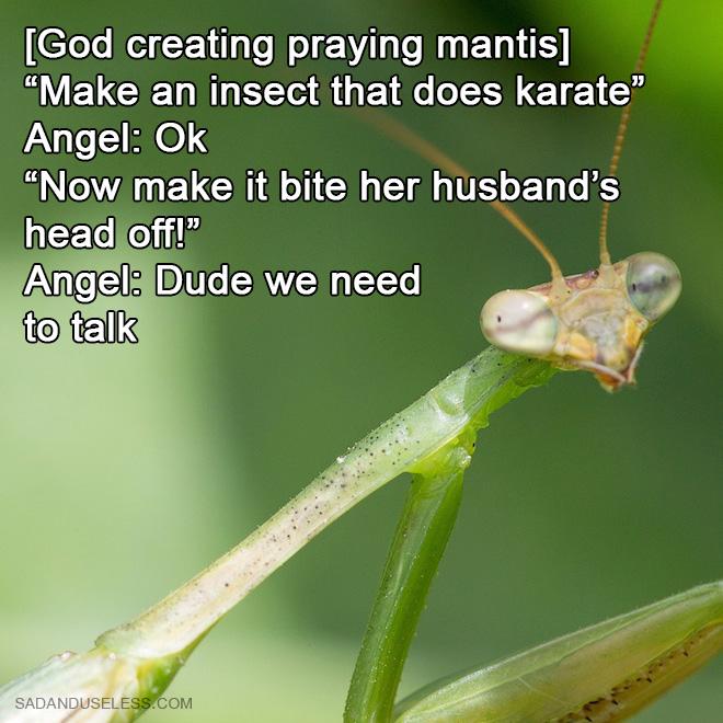 How God created praying mantis.