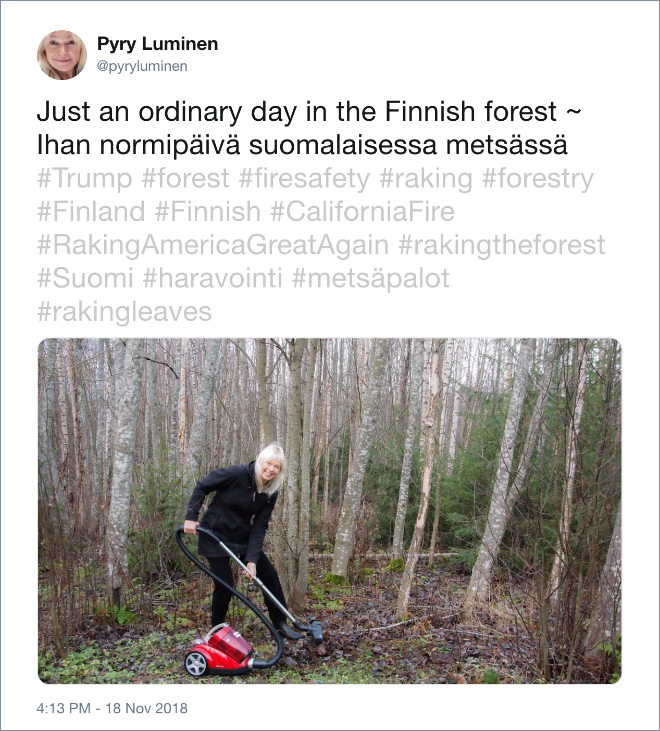 Just an ordinary day in the Finnish forest.