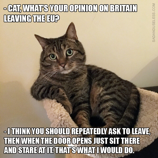 Cat's opinion on Brexit.