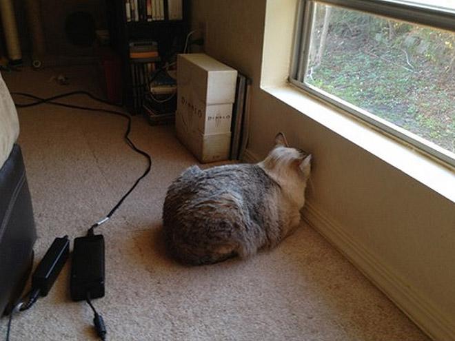 Cat staring at wall.