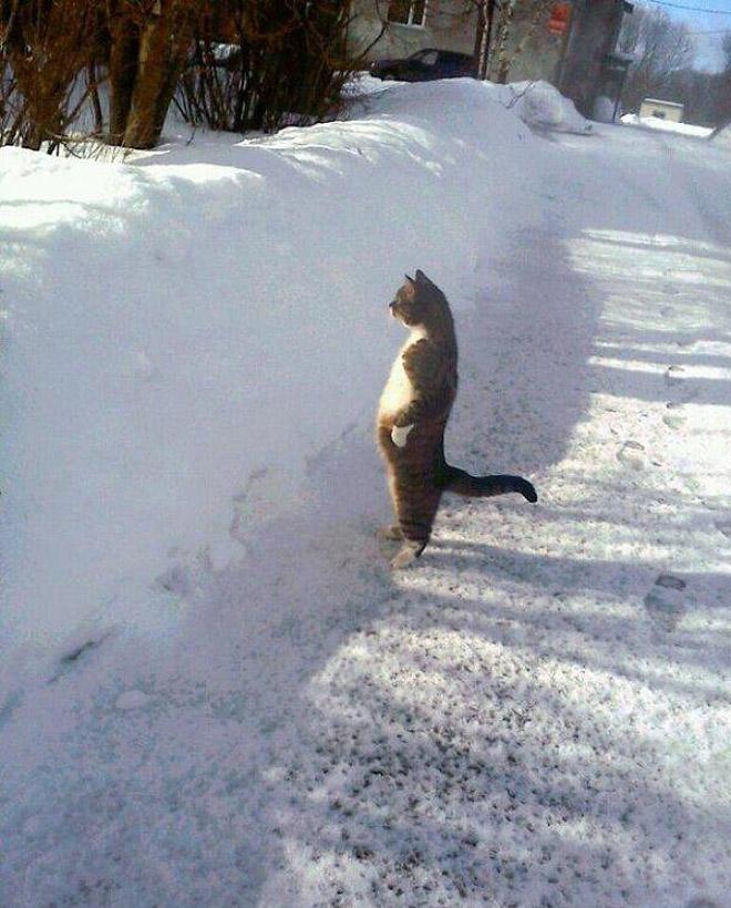 Cat staring at snow wall.