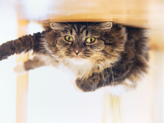 This poor cat is actually stuck to the ceiling.