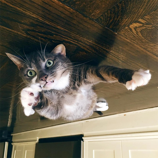 This poor cat stuck to the ceiling.