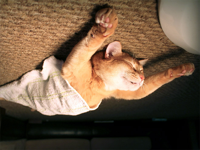 Funny upside down cat.