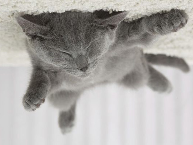 Poor cat stuck to the ceiling.
