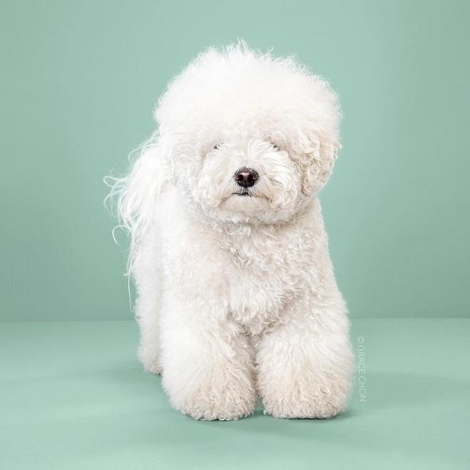 Dog before haircut.