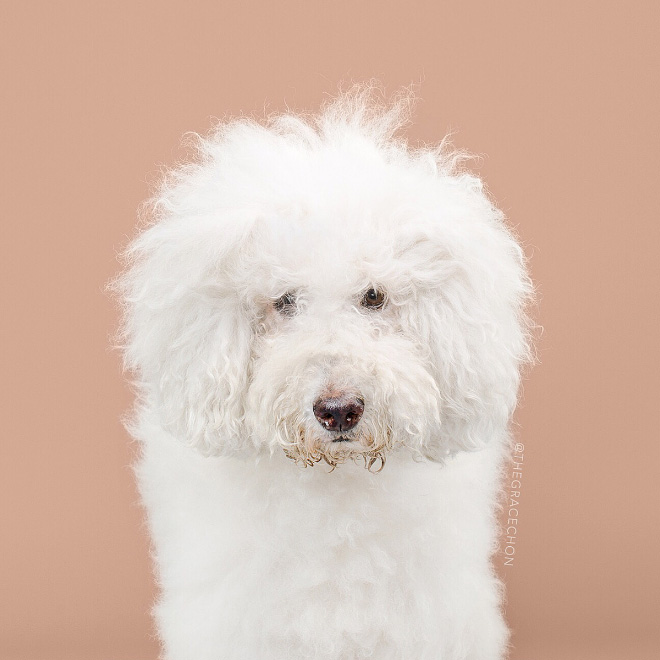 Funny dog before haircut.