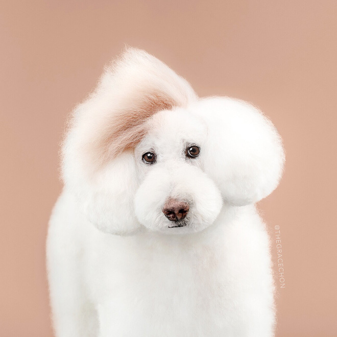 Funny dog after haircut.
