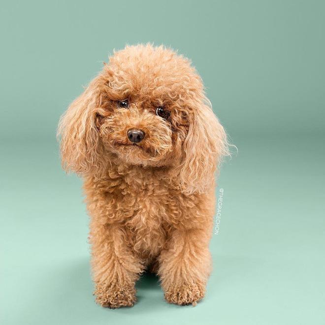 Cute dog before grooming.