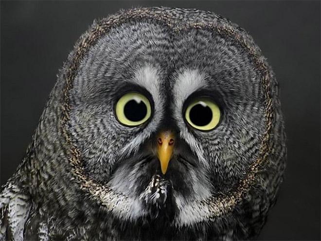 Shocked owl.