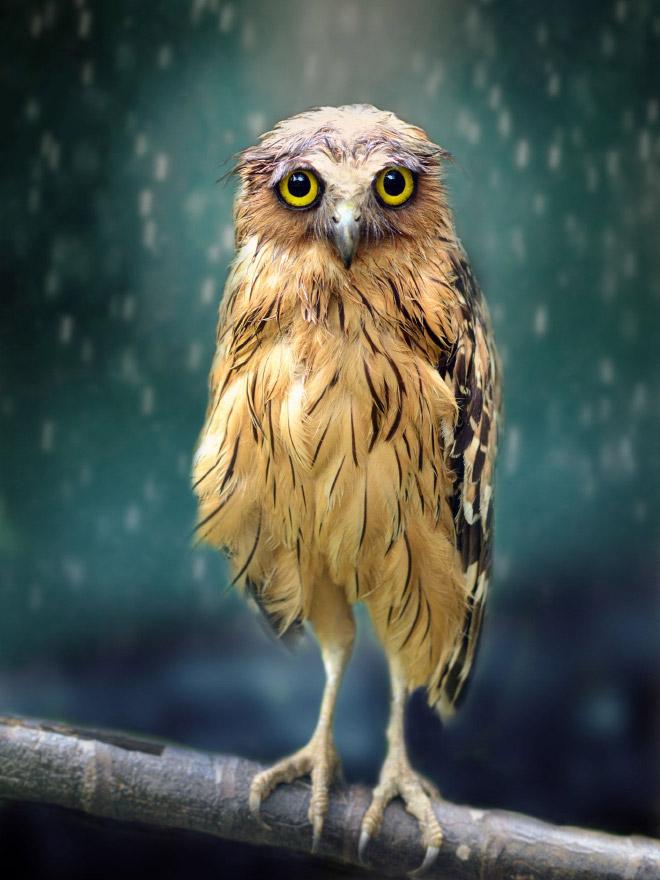 Sad owl.