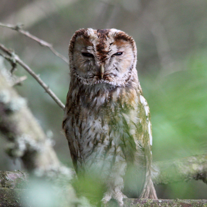 This owl hates everyone.