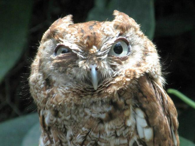 [Image: funny-owl2.jpg]