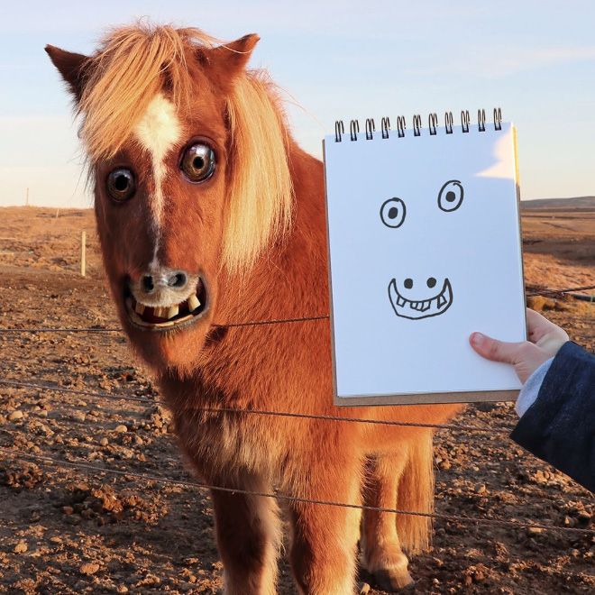 Horse doodle comes alive.