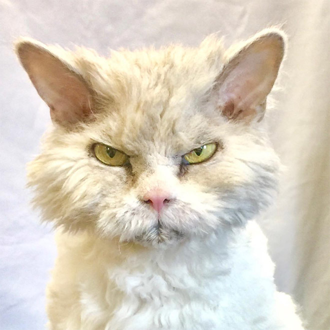 Angriest cat ever...